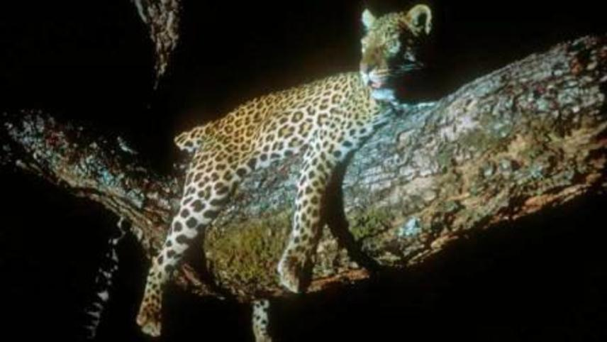 Leopard: The Agent of Darkness
