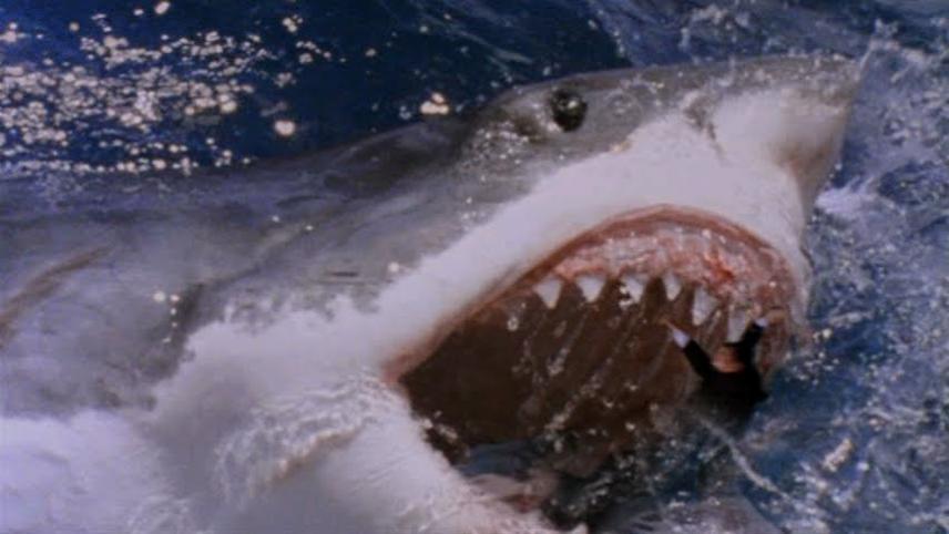 megalodon shark attack - 856×482