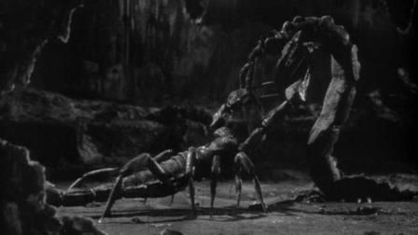 The Black Scorpion