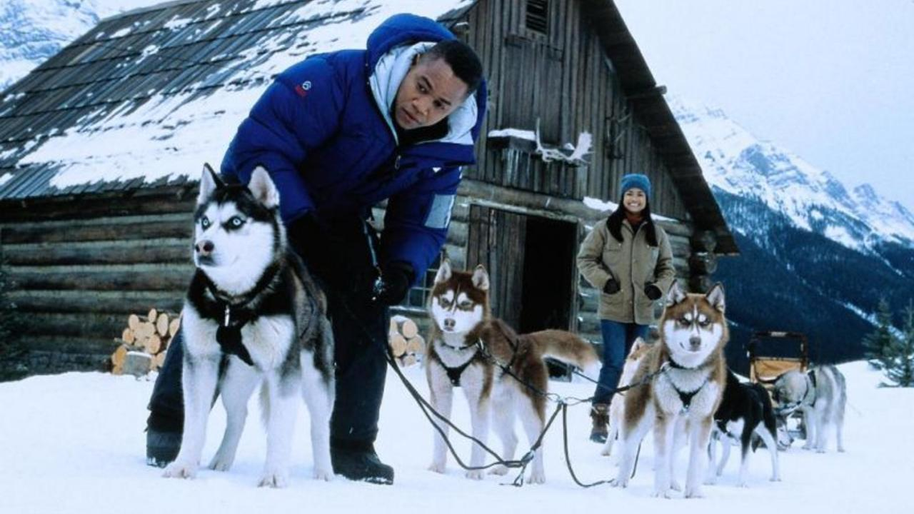 8 Dog Breeds That Love the Snow | PawCulture