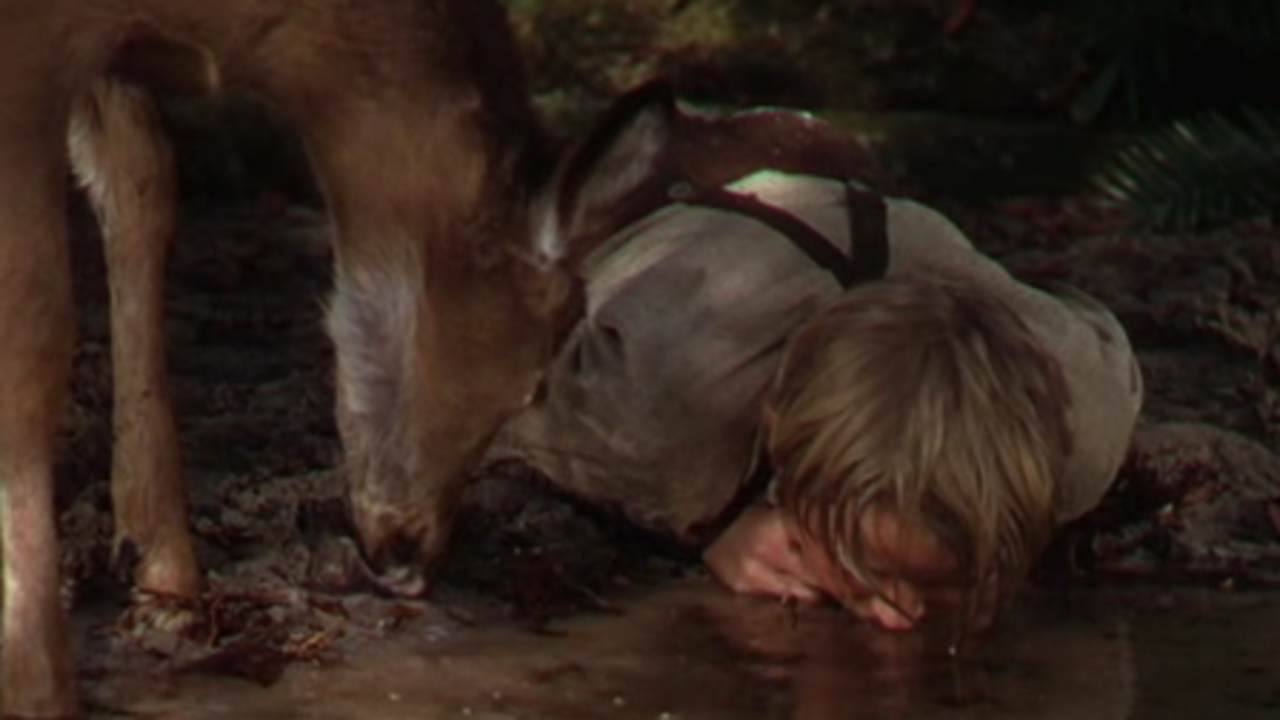 The Yearling trailer