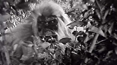 White Pongo 1945 Mubi