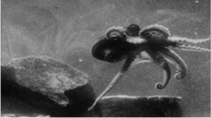 Secrets of Nature: Fathoms Deep Beneath the Sea