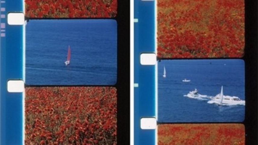 Poppies and Sailboats