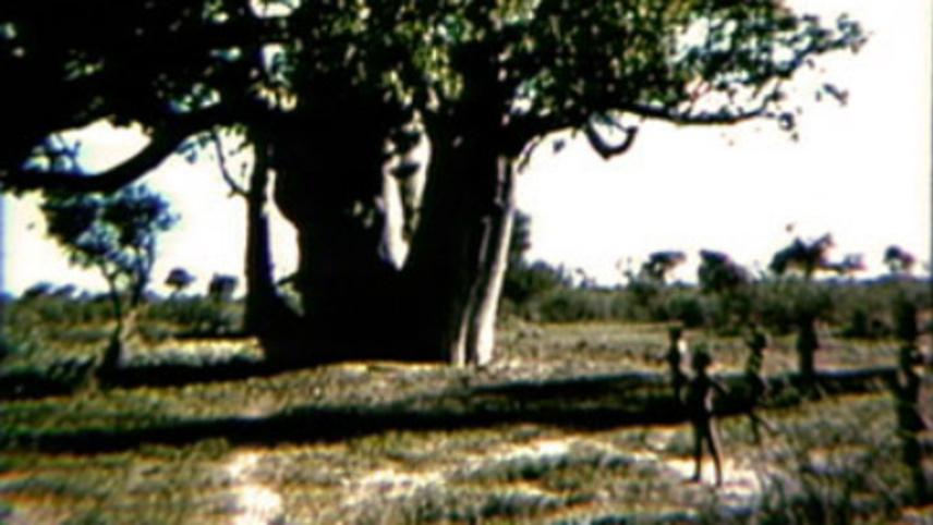 Baobab Play