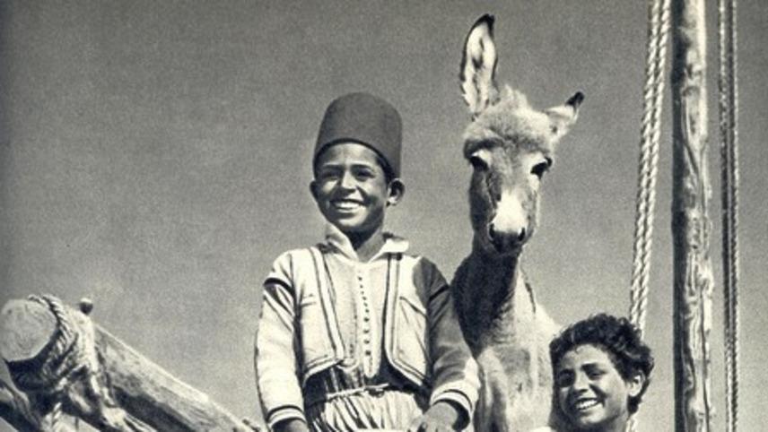Bim, der Esel