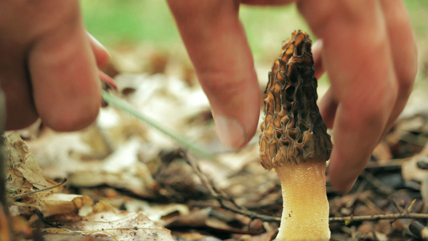 Now, Forager: A Film About Love & Fungi