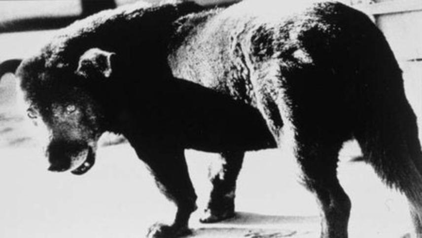 Daido Moriyama: Stray Dog of Tokyo