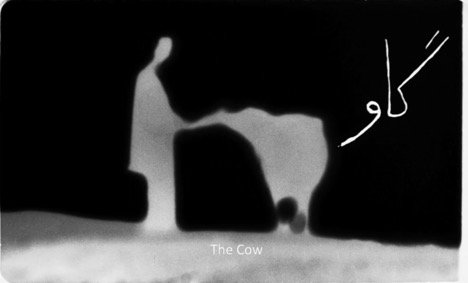 The Cow