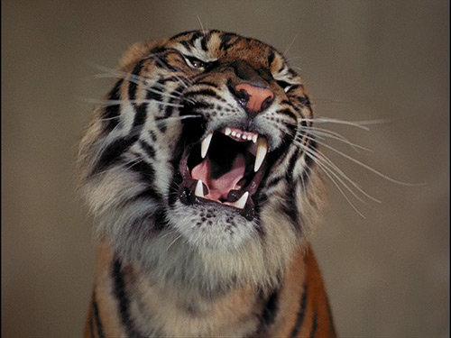 Fritz Lang's Tiger Epic