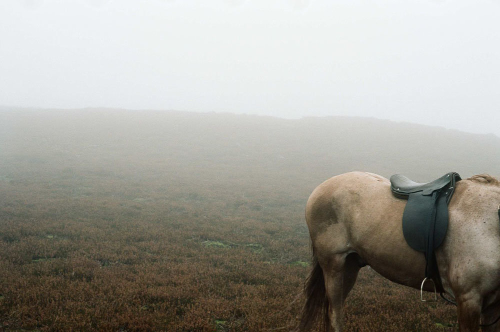 venice and toronto andrea arnold s wuthering heights on andrea arnold s wuthering heights